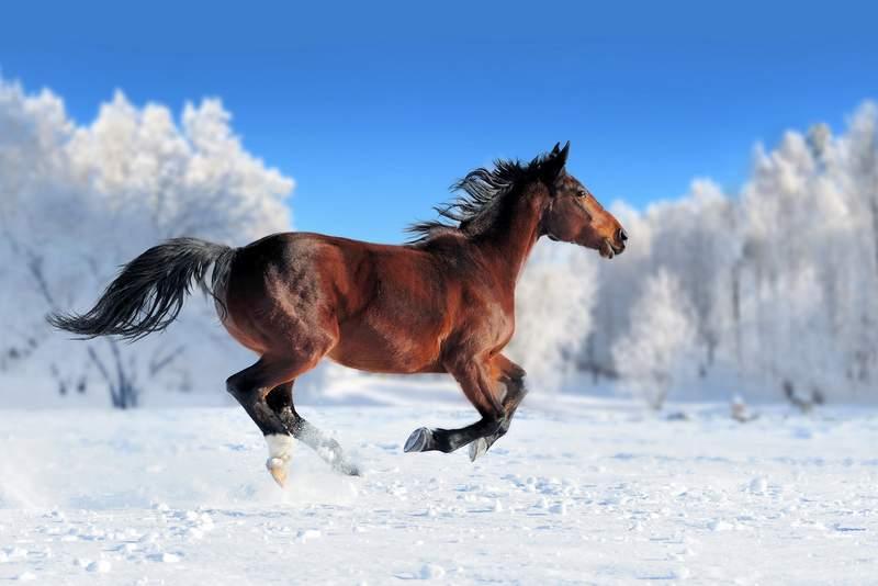 Zimowisko w Runowie
