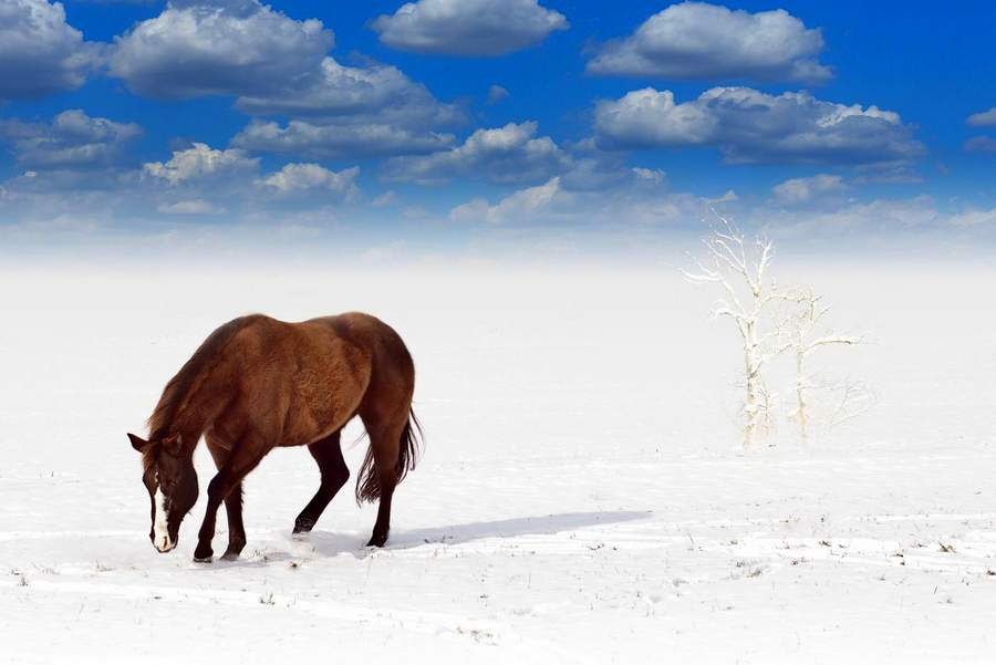 Sprawdzone zimowisko 2016 w Runowie
